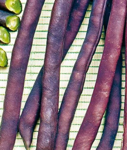 Frö fröer Böna, Bryt- 'Purple Queen'
