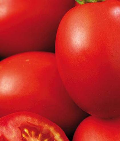 Frö fröer Tomat, Växthus- 'Olivade' F1
