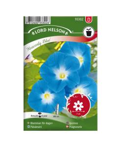 Frö fröer Blomman för dagen, Heavenly Blue