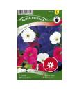 Frö fröer Petunia, Trädgårds-, Colorama F2, bl f.