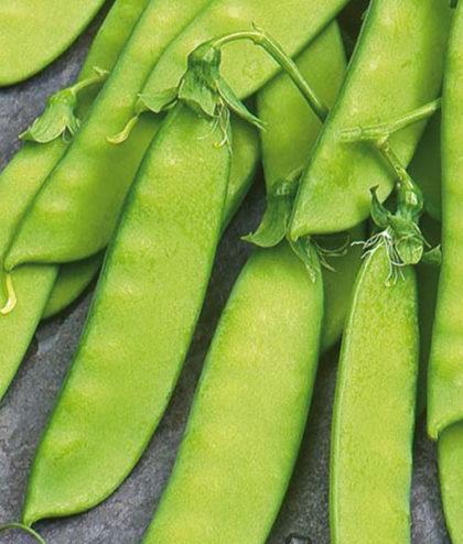 Köp frö fröer Ärt, Socker- 'De Grace' på nätet