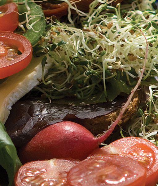 Primo Vitamino Alfaalfa organic 5651