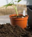 Sticketiketter PlantStart 6005