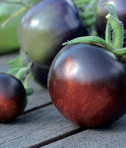 Tomat, Hög 'Indigo Rose' 91649
