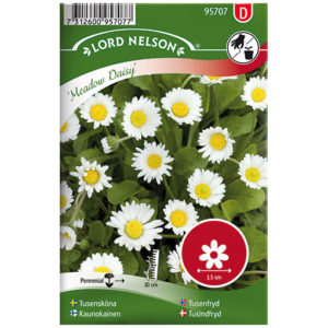 Tusensköna 'Meadow Daisy'