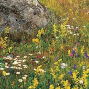 Frö fröer Blomsterängsblandning Storport