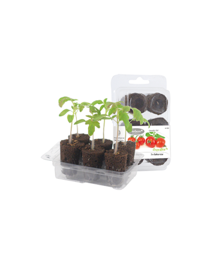 easy-to-grow-kruktomat-5520