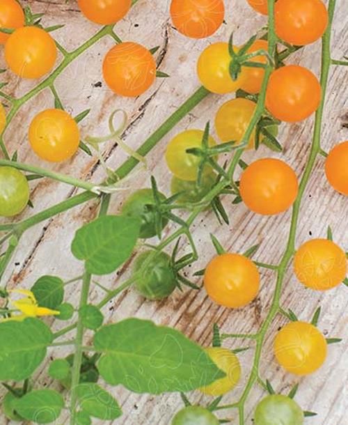 tomat-86073-img
